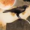 Satyricon + Bliss of Flesh + Dead Season