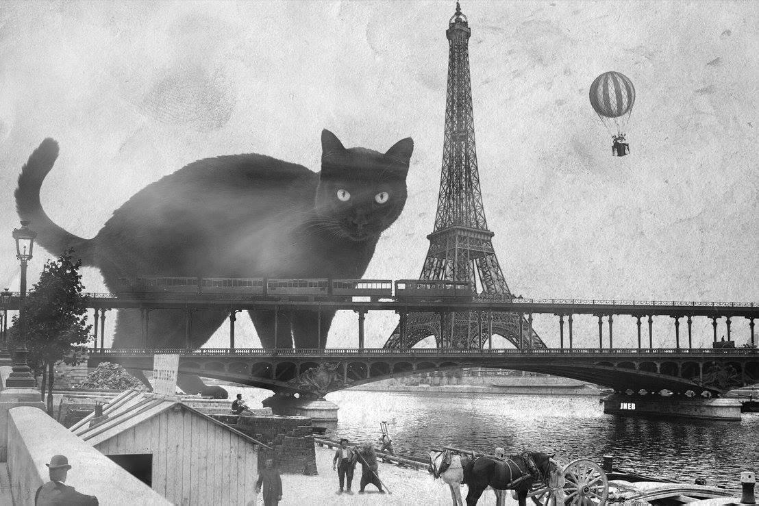 au chat voir vivre le salon de th lillois peupl de chats actualit lille la. Black Bedroom Furniture Sets. Home Design Ideas