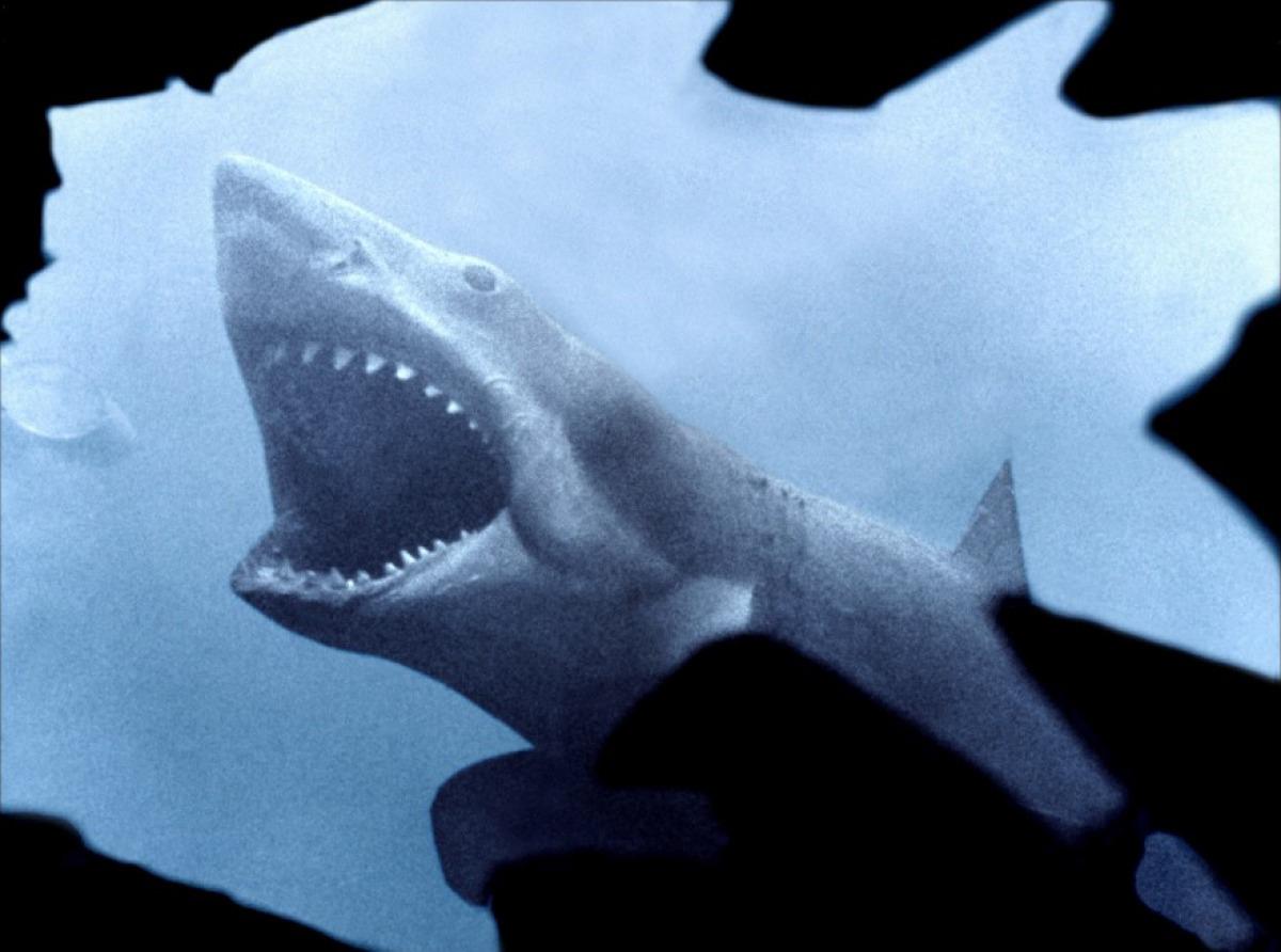 Kultissime : Les Dents de la mer
