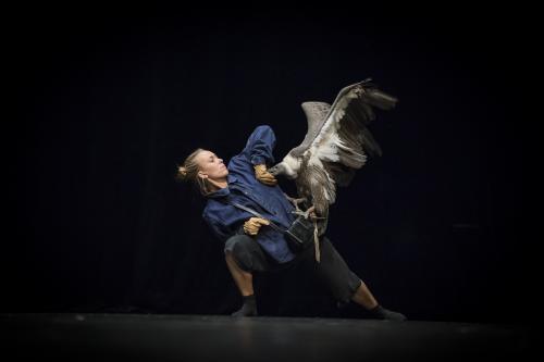 Une poétique de l'effroi – Pièces pour danseurs, circassiens, chouettes et vautour