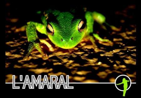 Amaral (L')