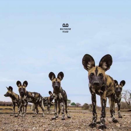 Balthazar – «Fever», le 4e album du groupe belge